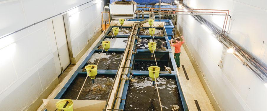 Hügelland AG Aquakultur