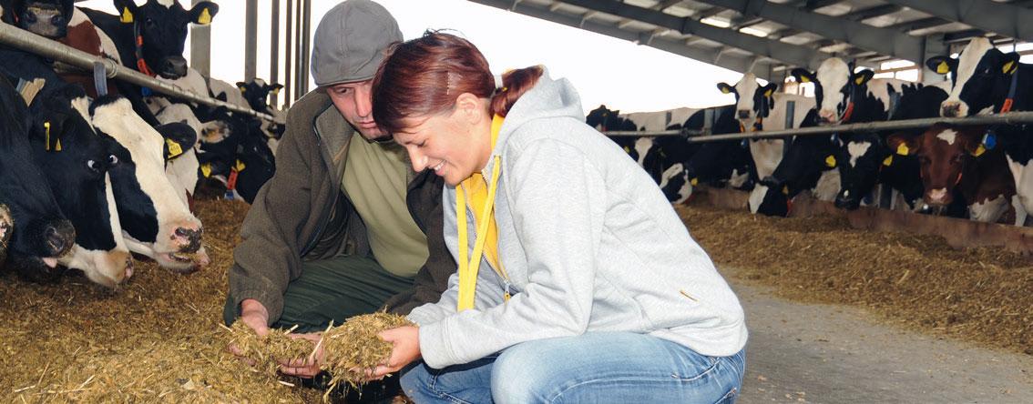 Hügelland AG Rinder Stall